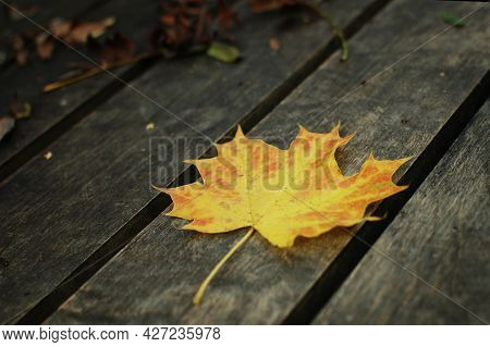 A Yellow-orange Autumn Leaf On A Park Bench. Autumn Maple Leaf On A Wooden Bench