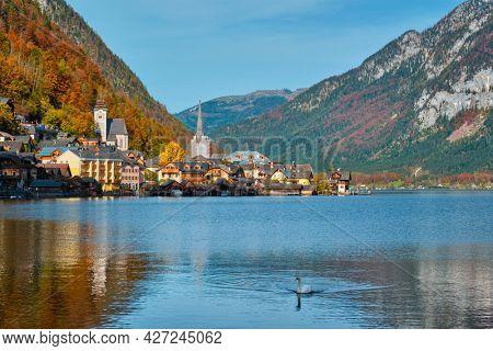 Austrian tourist destination Hallstatt village on Hallstatter See lake in Austrian alps with white swan in lake. Salzkammergut region, Austria