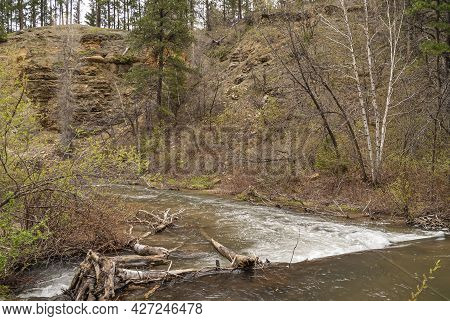 Black Hills National Forest, Sd, Usa - May 31, 2008: Fast Streaming White Foaming Creek Among Green
