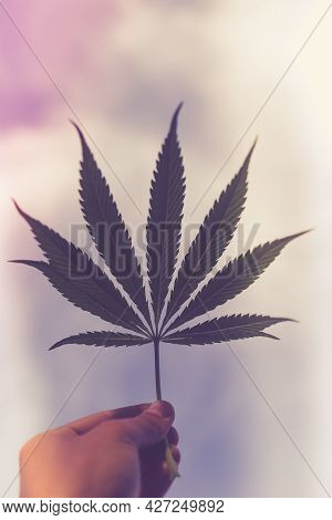 Beautiful View Of A Cannabis Leaf In A Man's Hand Against The Background Of A Blue Sky With Clouds