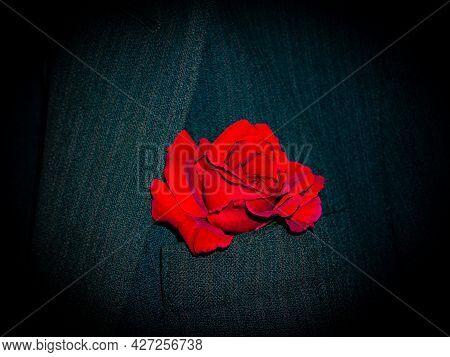 Red Rose In The Breast Pocket Of A Men's Black Jacket. Red Rose Flower. Suit Jacket. Men's Clothing.