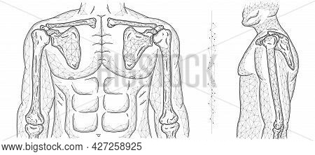 Polygonal Vector Illustration Of A Human Model, Shoulder Joint, And Elbow Joint.