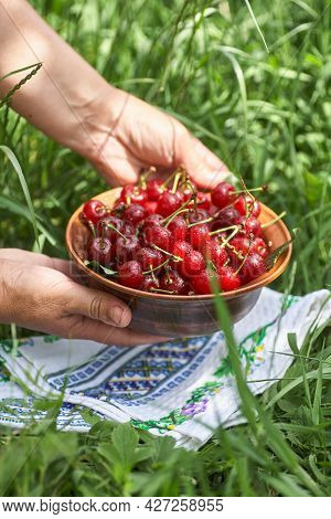 A Bowl Full Of Sweet Ripe Red Cherries Standing On The Green Grass. Woman Lays A Bowl Of Cherries On