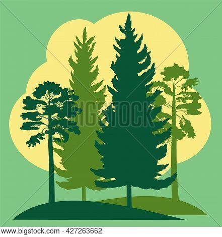 Forest Silhouette. Landscape With Coniferous Trees. Beautiful Green View. Pine And Spruce Trees. Sum
