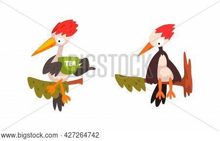 Woodpecker Bird Sitting On Tree Branch Set, Funny Woodland Woodpecker Bird Cartoon Character Vector