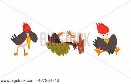 Funny Woodpecker Bird Character Set, Comic Woodland Woodpecker Bird Cartoon Vector Illustration