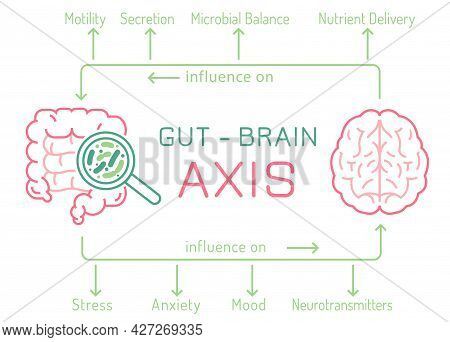 Gut - Brain Axis Landscape Poster. Useful Infographic.