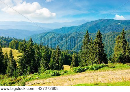 Sunny Summer Landscape Of Carpathian Mountains. Forest And Meadows On The Hills Rolling In To The Di