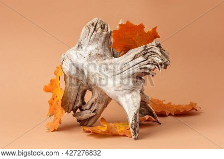 Old Root And Bright Autumn Fall Leaves. Beige Color Background For Branding And Packaging Presentati