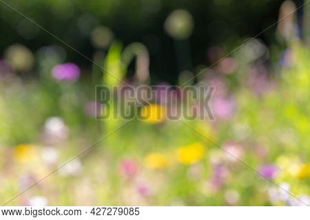 nature and flora concept - blurry background of summer field with flowers