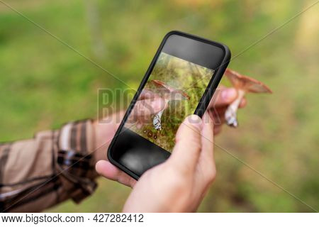 technology, picking season and people concept - male hands with smartphone using mobile app to identify mushroom