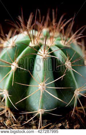 Little cactus plant against black wall.