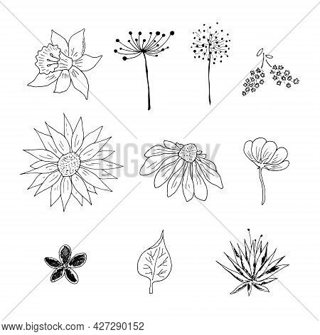 A Set Of Flowers Chamomile, Forget-me-not, Lilac, Lily. Drawn By Hand With Pen And Ink. Isolated On