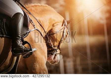 Portrait Of A Beautiful Sorrel Horse With A Bridle On Its Muzzle And A Rider In A Leather Saddle, Wh