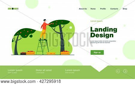 Farmer Standing On Ladder And Collecting Apples. Fruit, Season, Tree Flat Vector Illustration. Agric