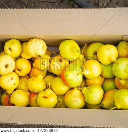 Yellow Ripe Pears In A Cardboard Box. Top View