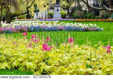 Flowers In Victoria Embankment Gardens In Spring, London, Uk