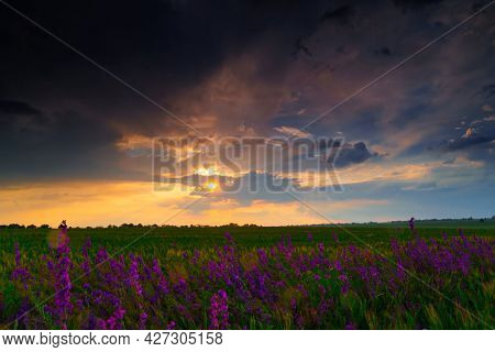 beautiful summer landscape at sunset, wheat field with wild flowers, colorful sky and sunlight through the clouds