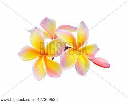 Plumeria Flower, Leelawadee Flower, Tropical Flower, Lanthom Flower Isolated On White Background, 5