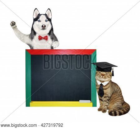 A Dog Husky And A Beige Cat In An Academic Hat Are Near A Blank Blackboard. White Background. Isolat