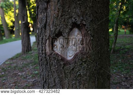 Carved Heart On The Bark Of A Tree Trunk In A City Park.