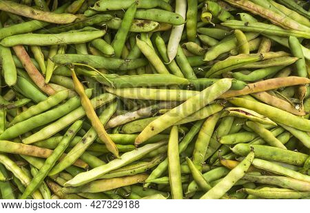 Pinto Beans In Pods In The Traditional Colombian Market - Phaseolus Vulgaris