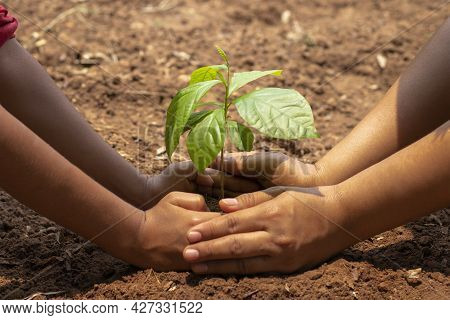 Children And Adults Planted Small Trees Together. In The Concept Garden To Reduce Air Pollution Or P
