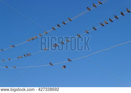 A Flock Of Starlings Sitting On Electric Wires Against Blue Sky Background. Birds On A Wires
