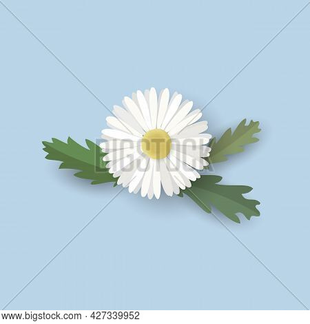 Isolated Chamomile Flower With Leaves. Vector Illustration