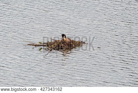Heron Nest On The Water, Close Up. The Heron Is Sitting In The Nest. High Quality Photo
