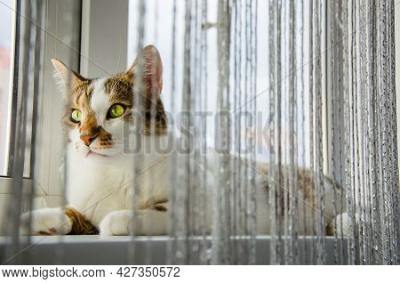 The Cat Lies On A White Window And Look At The Street. The Cat Looks At A Sunny Day