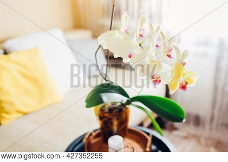 Yellow Orchid In Blossom Blooming On Coffee Table By Candle. Home Decorated With Flowers And Plants.