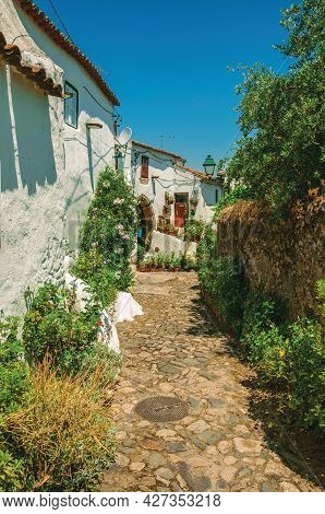 Old Houses With Whitewashed Wall In A Cobblestone Alley With Flower Bed At Castelo De Vide. Nice Lit