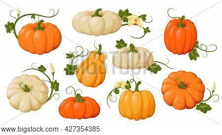 Pumpkins. Varied And Colorful Pumpkins Set. Orange And Yellow Autumn Pumpkins, Symbol Of Autumn, Agr