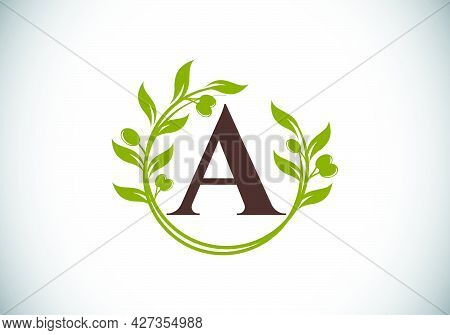Initial Letter A Sign Symbol With Olive Branch Wreath. Round Floral Frame Made By The Olive Branch.