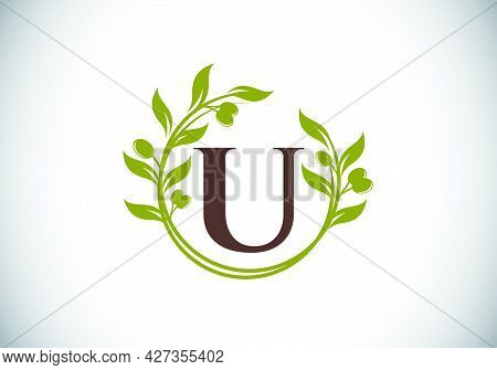 Initial Letter U Sign Symbol With Olive Branch Wreath. Round Floral Frame Made By The Olive Branch.