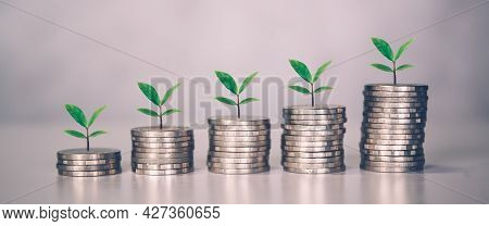 Coin Stack With Increase Growth And Leaf, Finance And Saving With Tree, Investment For Profit And Su