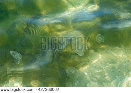 Natural Abstract Water Texture With Transparent Silhouettes Of Aurelia Aurita Jellyfish. Green-beige