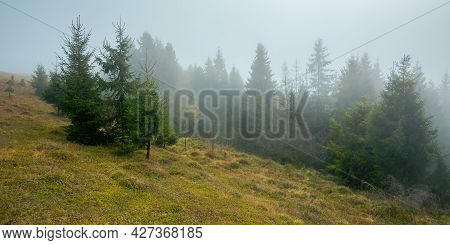 Foggy Nature Scenery In The Morning. Spruce Forest On The Grassy Hill. Mysterious Atmosphere