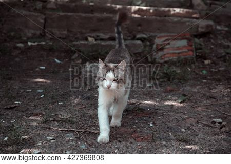 Stray, Homeless Animal In The Street Outdoors, One Lonely Sad Cat On The Ruins Of An Abandoned Crumb