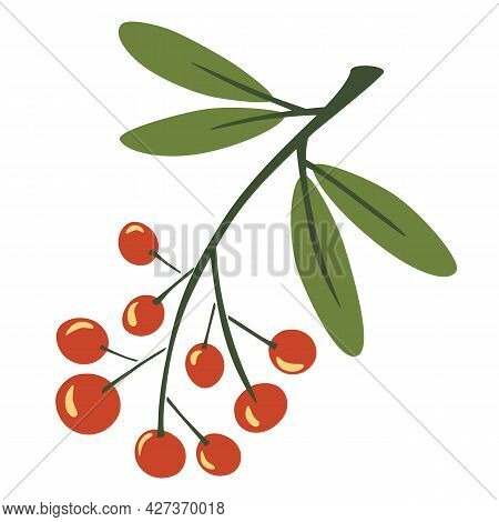 Rowan Twig. Berries On A Twig. Autumn Foliage. Bunch Of Mountain Ash. Plants And Trees. Red Berries.
