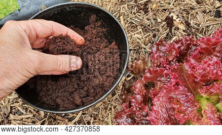 Fresh coffee grounds for the garden, fertilizer for the garden, recycle coffee grounds