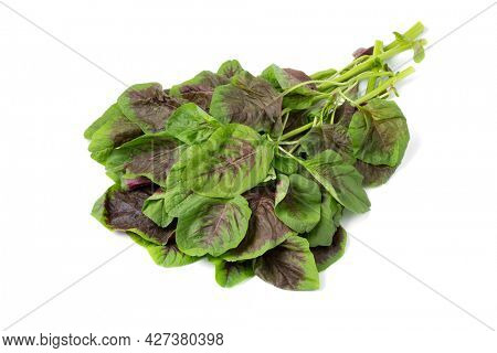 Fresh raw edible amaranth leaves isoloated on white background