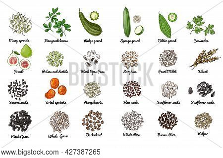 Vector Food Icons. Colored Sketch Of Food Products. , Nuts, Herbs, Beans, Cereals.