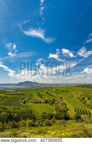 Vineyards near Nove Mlyny reservoir with Palava in Southern Moravia, Czech Republic