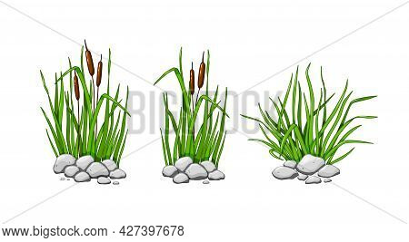 Reeds And Grass Grow In The Stones. The Green Grass Set Is Isolated On A White Background. Vector Il