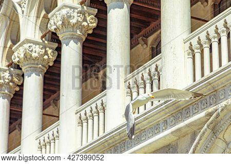 Seagull Flying In San Marco Square Of Venice City Of Italy With Doges Palace Colonnade Behind.
