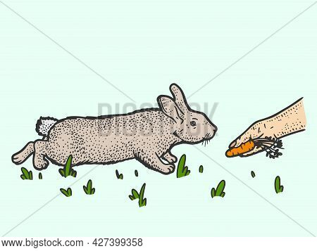 Man Feeds Rabbit With Carrot Color. Sketch Scratch Board Imitation.