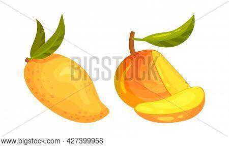 Ripe Mango Juicy Fruit Whole And Sliced Vector Set