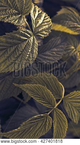 Leaves Background Gold Green Abstract Image, Nature, Leaf Aesthetic Background, Simple Leaves, Urtic